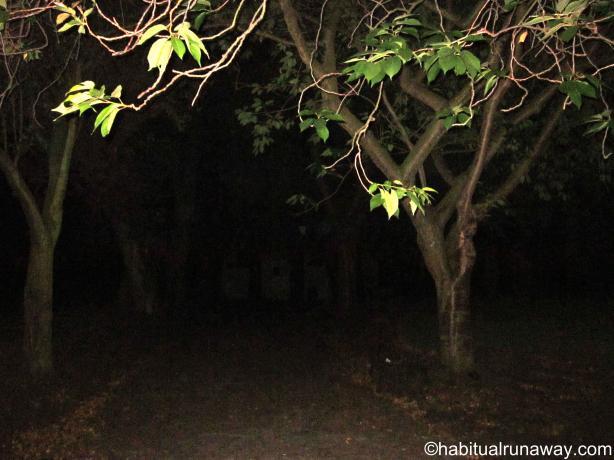 The Dark Dark Path