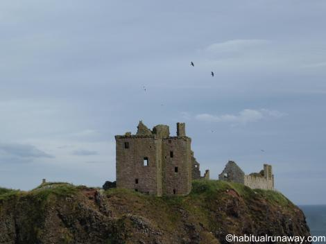 Birds Above Dunnottar