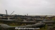 Driftwood Long Island