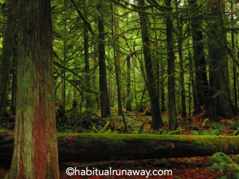 Lush and Green Cathedral Grove