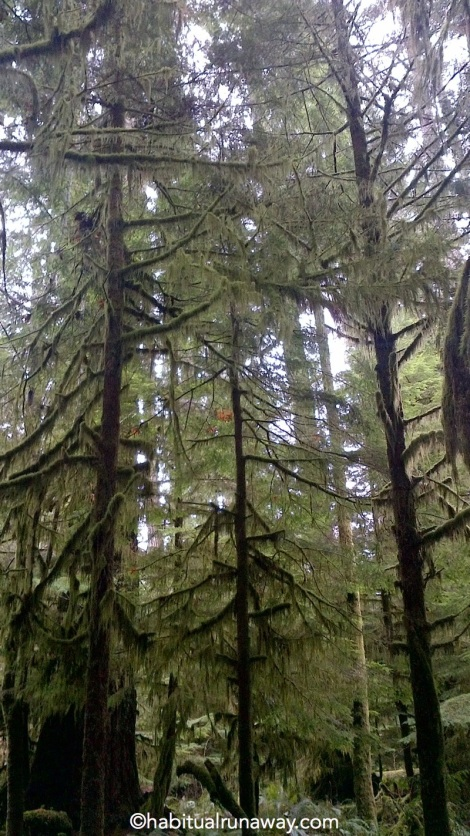 Mossy Cathedral Grove
