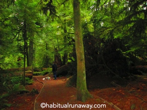 Two Dogs in Cathedral Grove