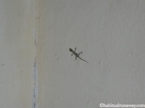 Indoor Lizard
