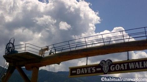 Dave's Goat Walk