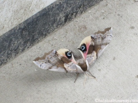 Moth Eyes Revelstoke