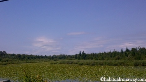 Lily Pads Northern Ontario