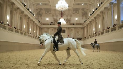 lipizzaner horse and rider