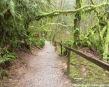 Mossy Hike