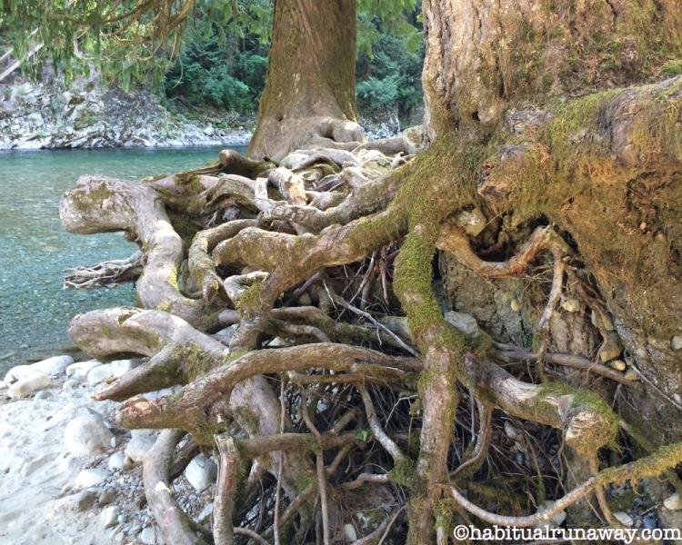 Roots Chehalis BC