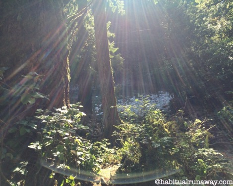Sunshine Fraser Valley Forest